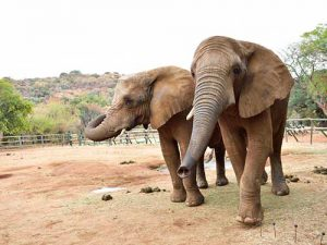 Elephant-and-Monkey-Sanctuary,-Hartbeespoort,-North-West,-South-Africa-_-by-South-African